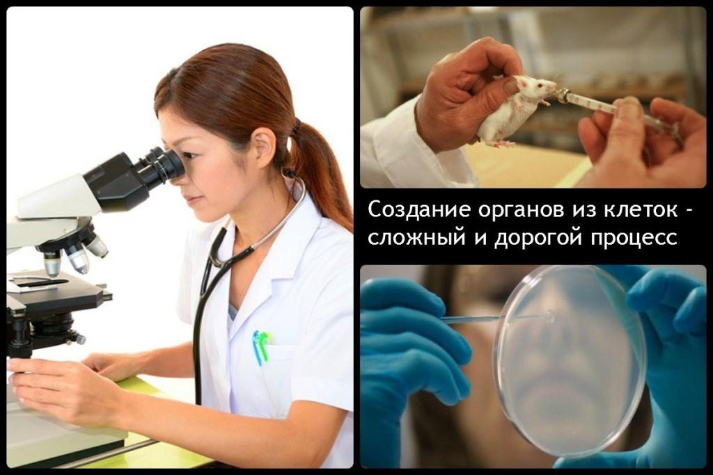 Создание органов из клеток - сложный и дорогой процесс