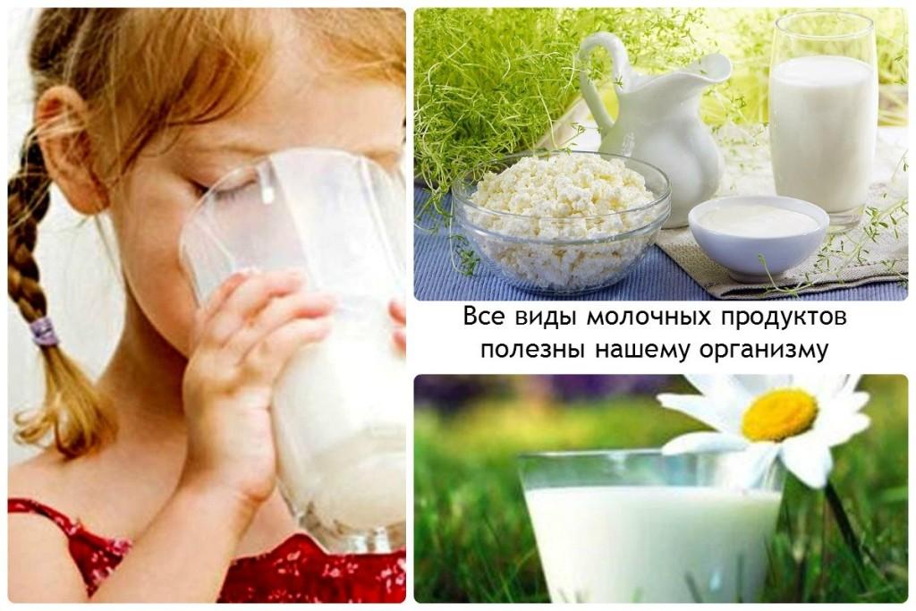 Все виды молочных продуктов полезны нашему организму