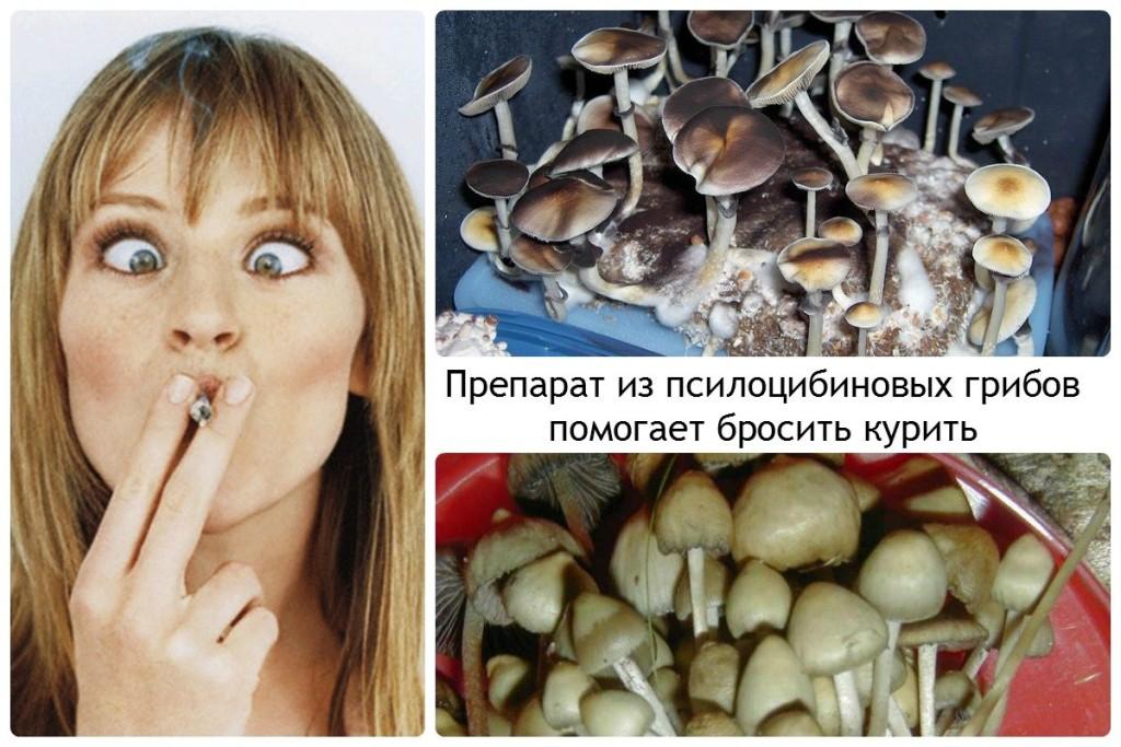 Препарат из псилоцибиновых грибов помогает бросить курить