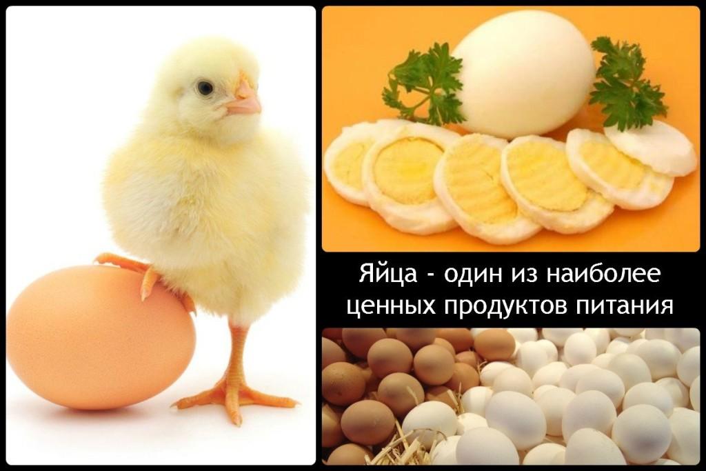 Яйца - один из наиболее ценных продуктов питания