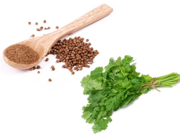 Кориандр в семенах и зелень кинзы