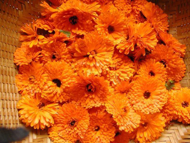 Цветочные корзинки оранжевой календулы