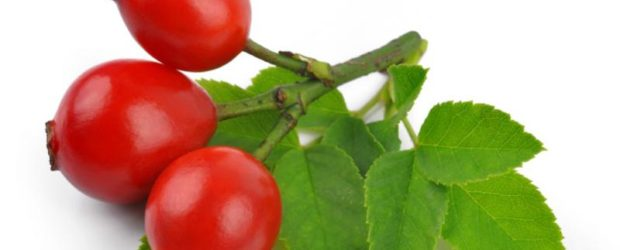 Шиповник, ягоды