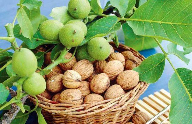 Орехи на ветке и в корзине