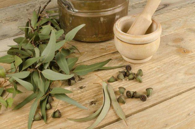 Ступка и листья эвкалипта