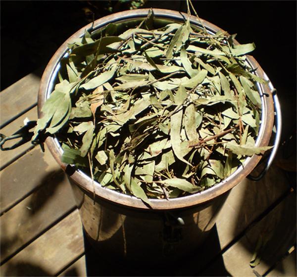Сушёные листья эвкалипта
