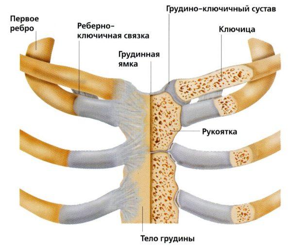 Грудинно-ключичный сустав (схема)