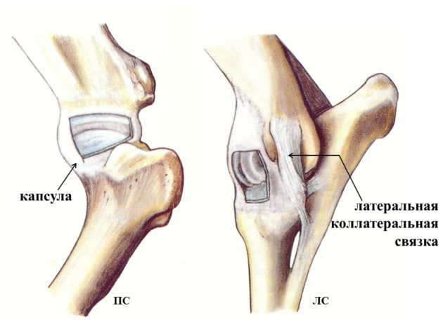 Коллатеральная связка локтевого сустава
