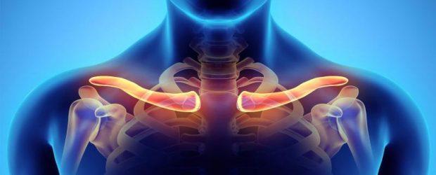 Скелет плечевого пояса