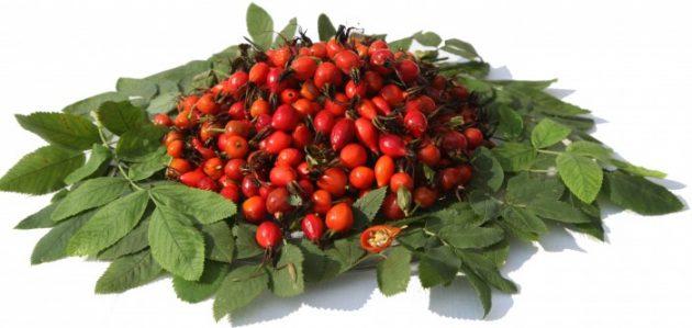 Ягоды и листья шиповника