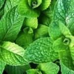 Травы от простуды и кашля