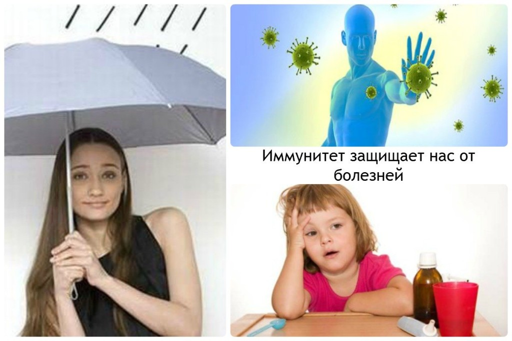 Иммунитет защищает нас от болезней