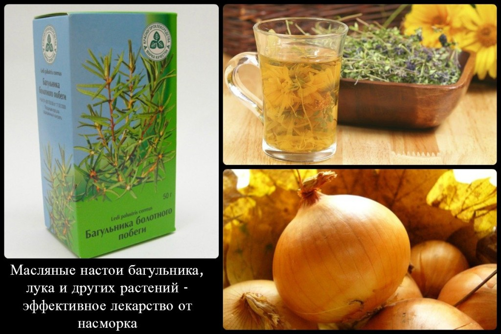 Масляные настои багульника, лука и других растений - эффективное лекарство от насморка