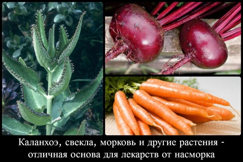 Каланхоэ, свекла, морковь и другие растения - отличная основа для лекарств от насморка