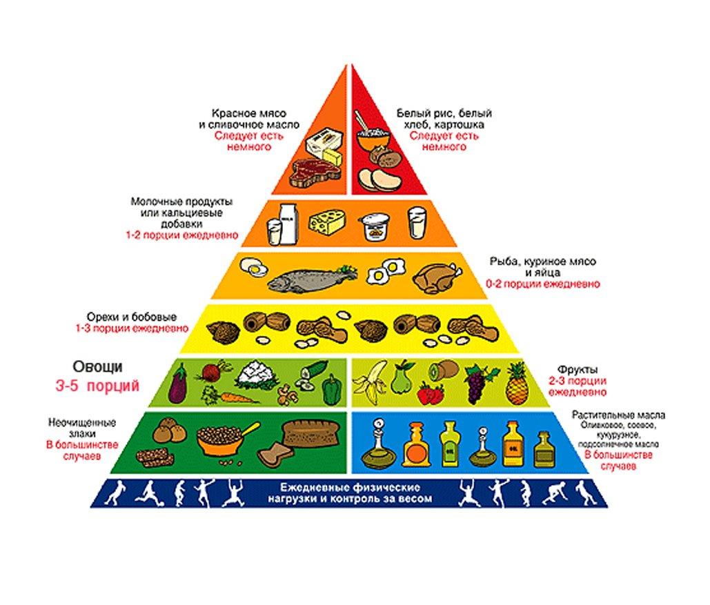 Схема пирамида питания