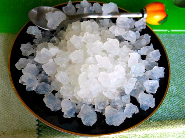 Индийский рисовый или морской гриб