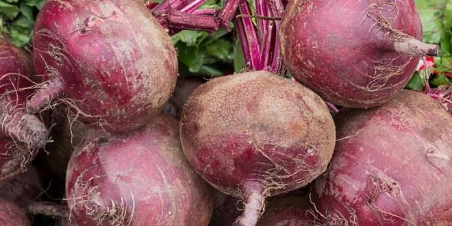 свёкла полезные свойства и витамины