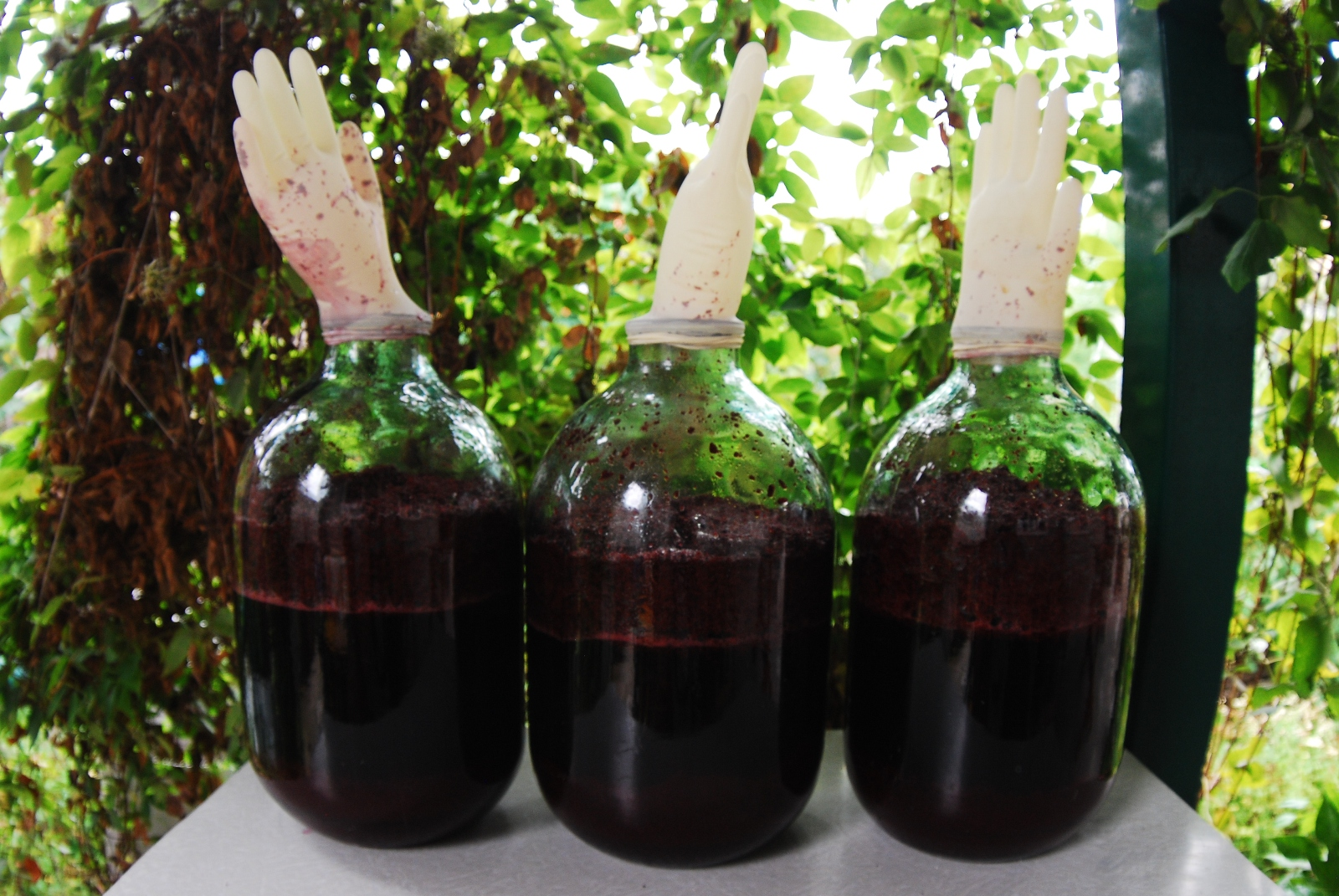 Как сделать черноплодное вино