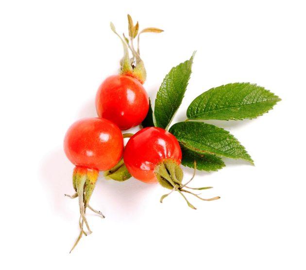 Плоды шиповника дикорастущего