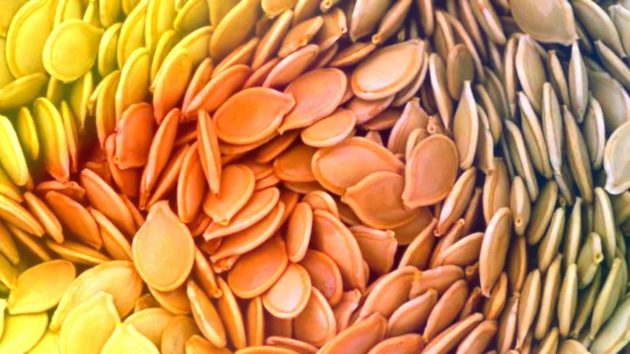 Крупные семена тыквы
