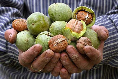 Грецкие орехи в руках