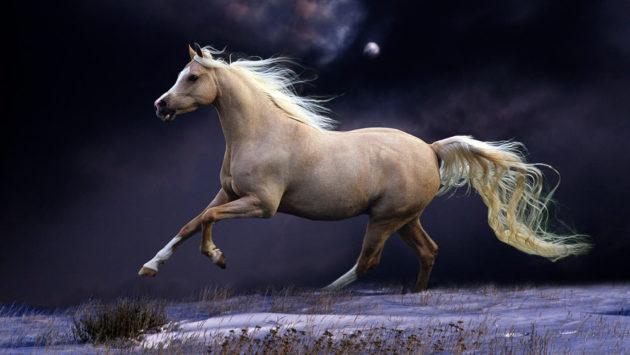Скачущая лошадь