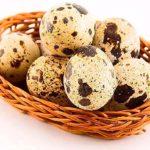 Перепелиные яйца: маленькое чудо природы с большой пользой для здоровья