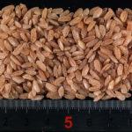 Зёрна красного риса «Девзира»