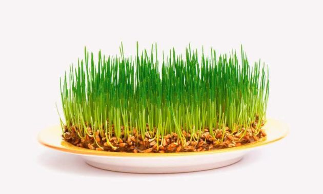 Зелёные ростки