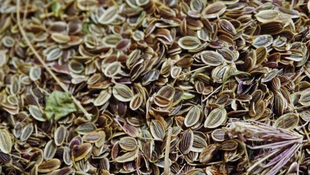 Сушёные укропные семена